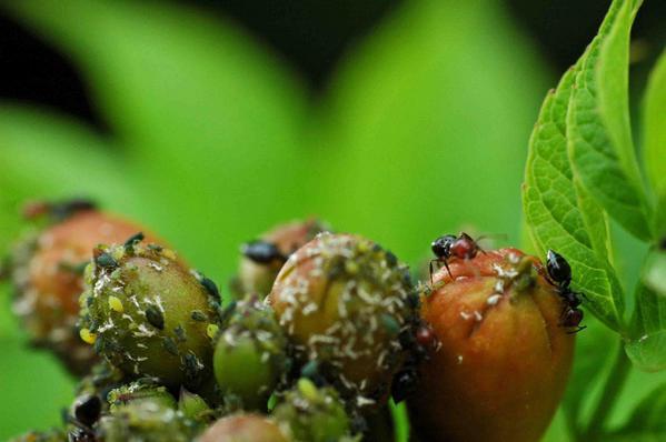 Micropolis ou la cite des insectes en Aveyron