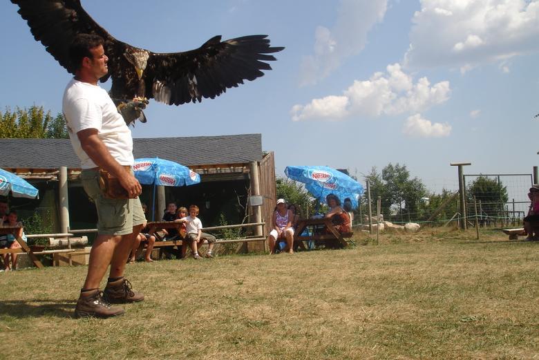 Spectacle de fauconnerie traditionnelle au parc annimalier de Pradinas dans l'Aveyron