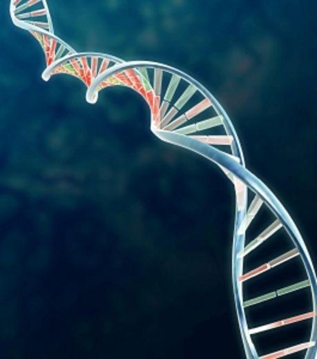 L'analyse ADN des dents a en effet montré que