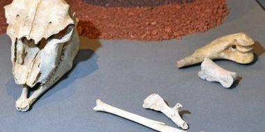 Les ossements analysés avaient été trouvés avec parures et outils dans la grotte de Treilles en Aveyron