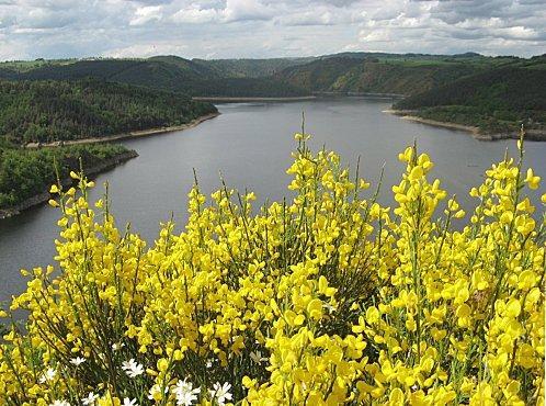 La Truyère prend sa source dans la forêt de la Croix-de-Bor, au sein du massif de la Margeride, à 1450 mètres d'altitude et dans le département de la Lozère