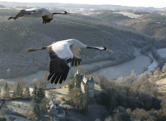 Le château de Conros se dresse depuis le Haut Moyen-Âge sur son éperon rocheux qui domine la boucle magnifique et sauvage de la Cère