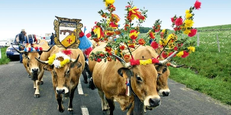 Aubrac : Fete de la Transhumance - Aubrac - Aveyron - France