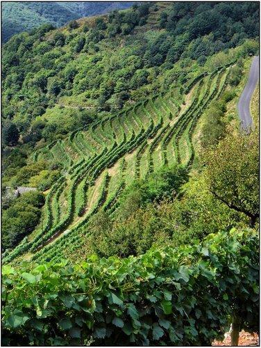 Le vignoble d'Entraygues et du Fel en terrasses et banquettes couvre deux types de sols, d'une part les coteaux de schistes du Fel et de l'autre les terres de barène et granit d'Entraygues.
