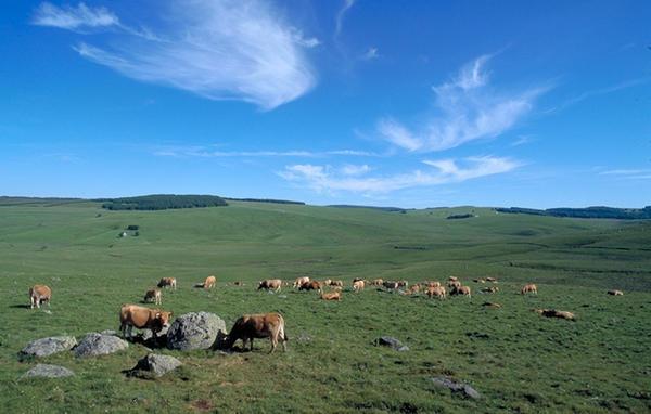 L'Aubrac est un pays merveilleux situé au sud du Massif Central sur 3 départements (Cantal, Aveyron, Lozère)
