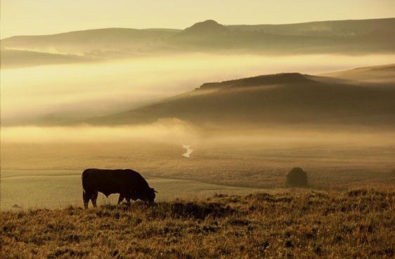 Aubrac, haut lieu de la nature et du patrimoine préservés